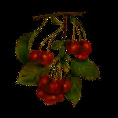 Рецепты из вишни