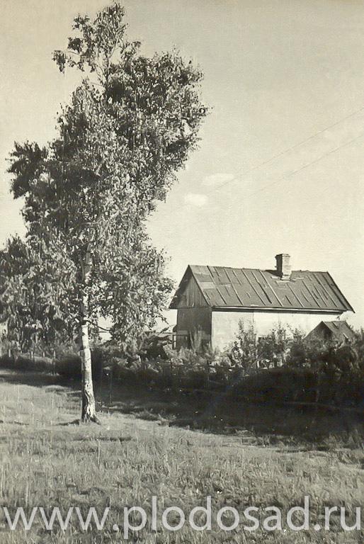 Дача Сергея Тихоновича Чижова в Мичуринце, лето 1954 г., автор неизвестен (Е. А. Пермяк?)