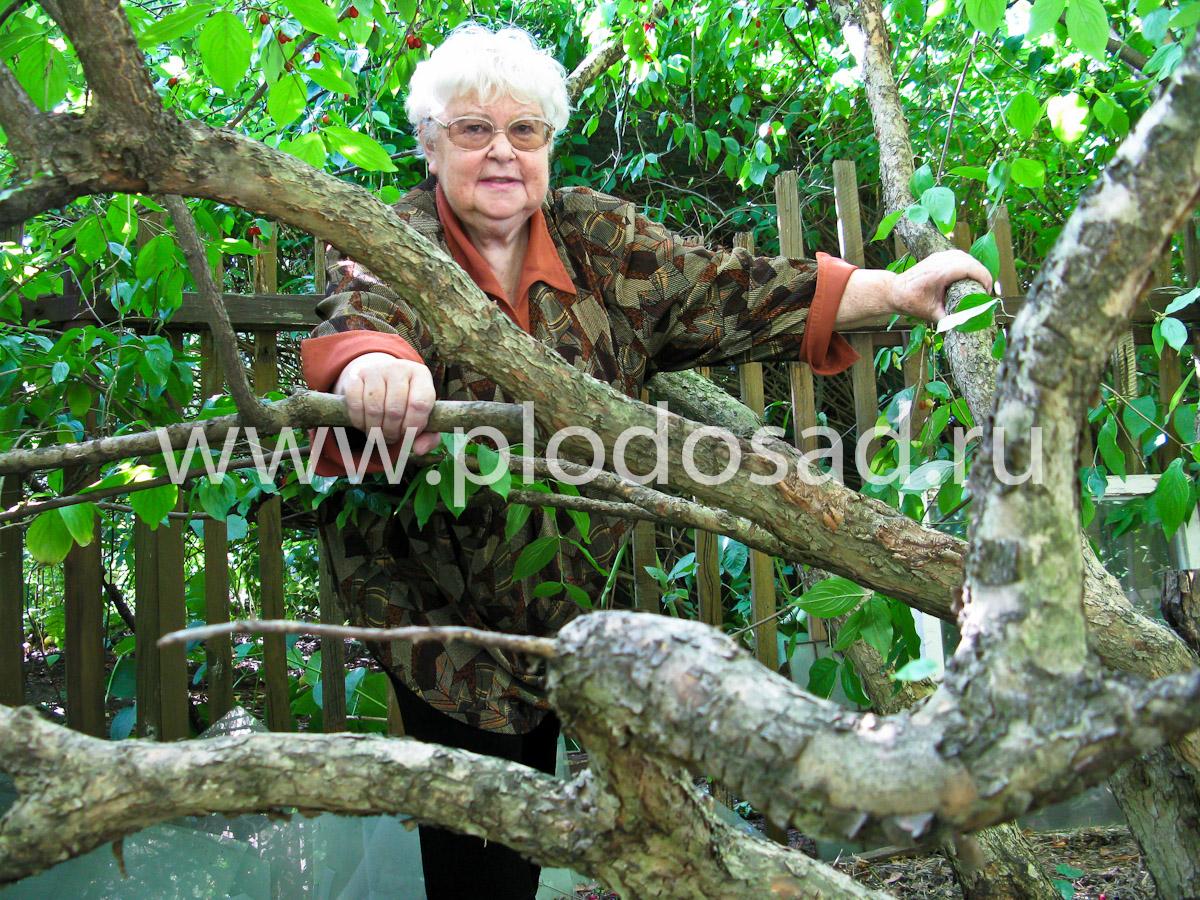 Ирина Сергеевна Исаева в подмосковном кизиловом саду