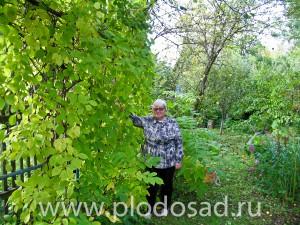 Ирина Сергеевна Исаева рядом с лимонником