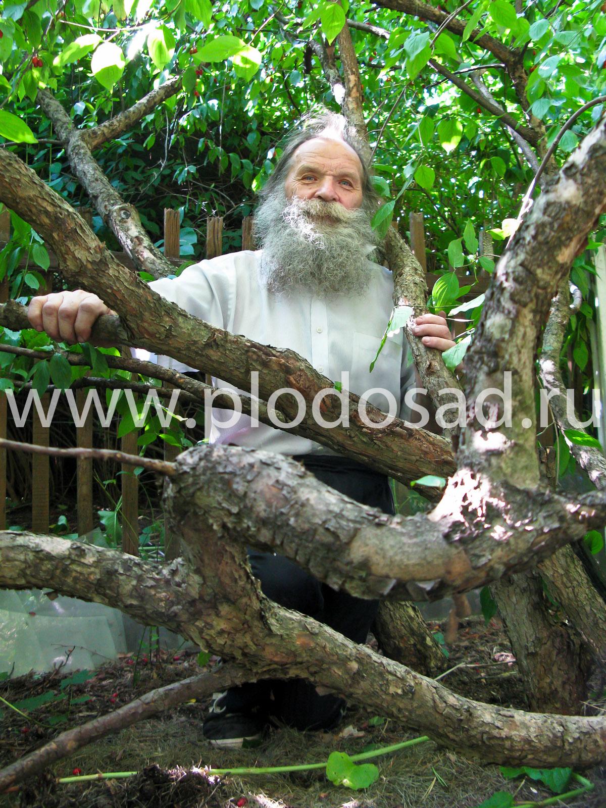 Владимир Васильевич Николаев в подмосковном кизиловом саду