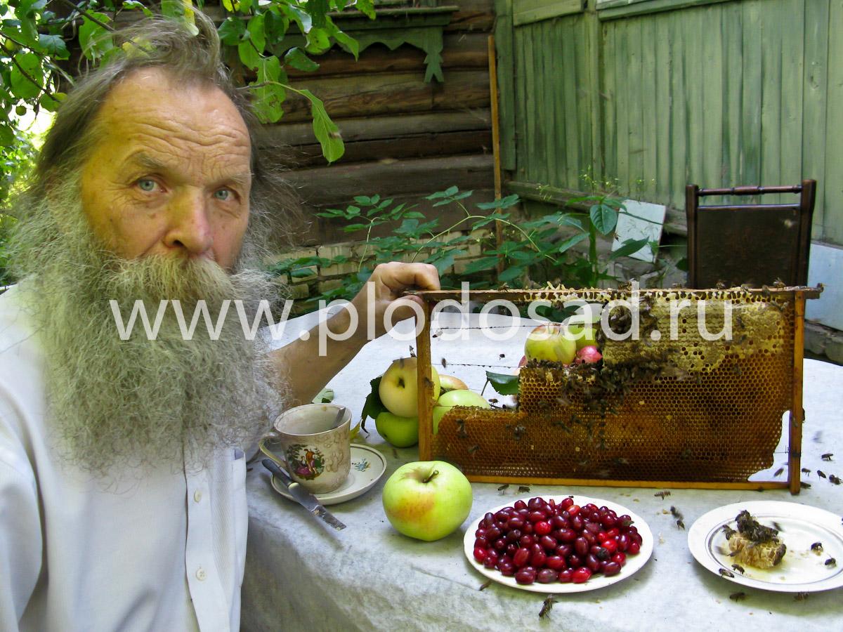 Без пчёл плодоношения кизила не будет