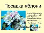 posadka-yabloni-01