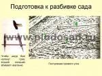 posadka-yabloni-02