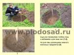 posadka-yabloni-10