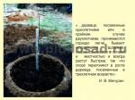 posadka-yabloni-18