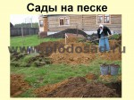 posadka-yabloni-19