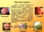 sorta-yabloni-isaeva-05