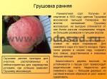 sorta-yabloni-isaeva-09