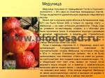 sorta-yabloni-isaeva-13