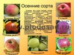 sorta-yabloni-isaeva-17