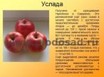 sorta-yabloni-isaeva-25