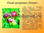 sorta-yabloni-isaeva-29