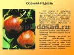 sorta-yabloni-isaeva-31