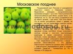 sorta-yabloni-isaeva-40