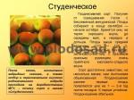 sorta-yabloni-isaeva-43