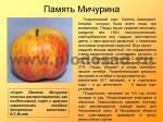 sorta-yabloni-isaeva-46
