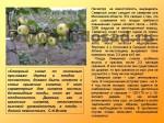 sorta-yabloni-isaeva-48