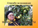 sorta-yabloni-isaeva-61