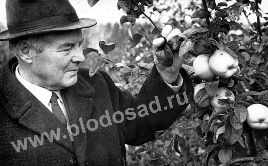 В_И_Будаговский в саду