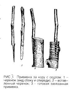 Прививка за кору и за кору под седлом