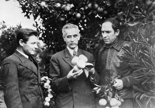 С В. И. Будаговским и Ф. М. Зориным (новый сорт грейпфрута Зорина)
