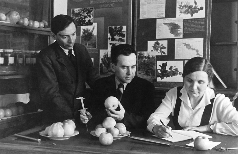 В  Институте плодоводства (Мичуринск)  1930-е годы