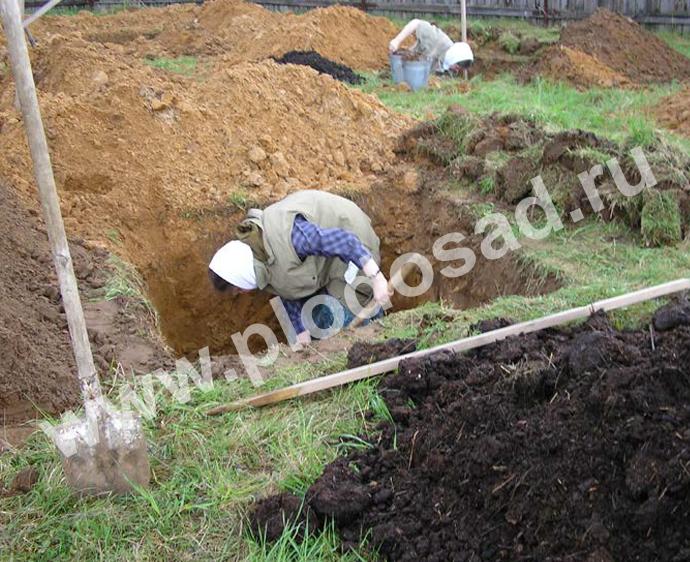 Сажать в песчаной почве 394