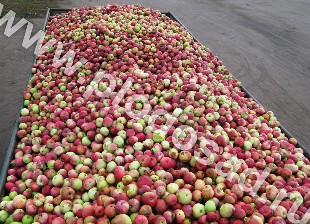 Различных сортов яблони