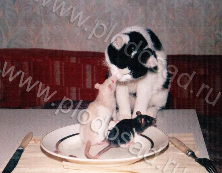 Кошки_3