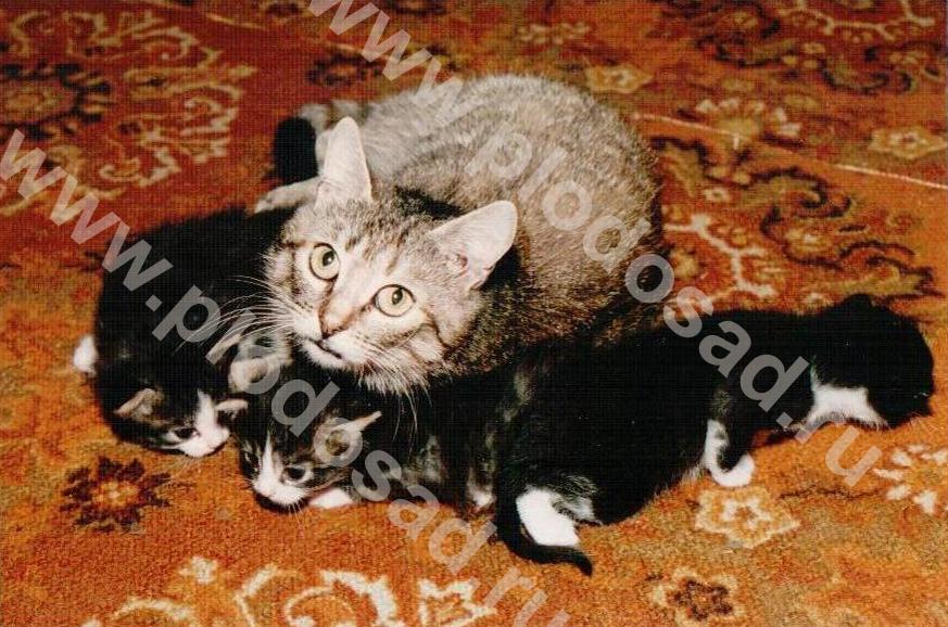 Кошки_5