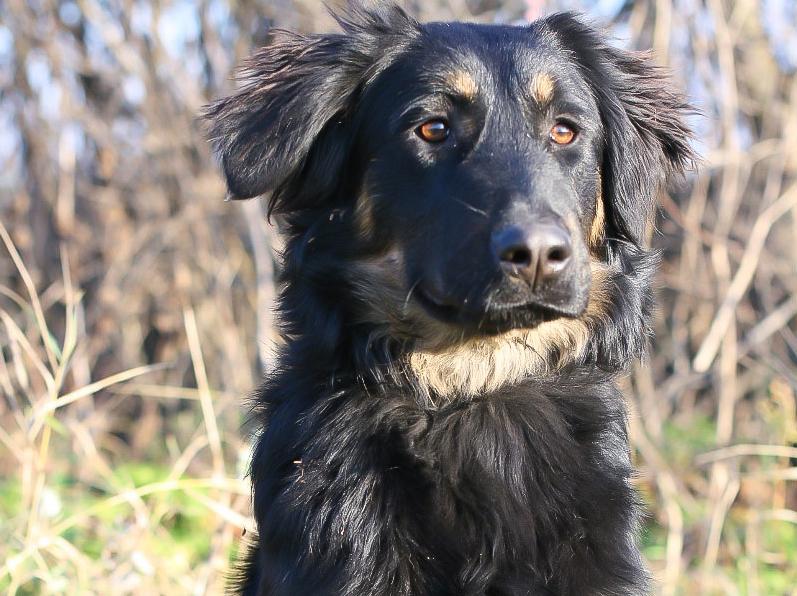 Собаки_2