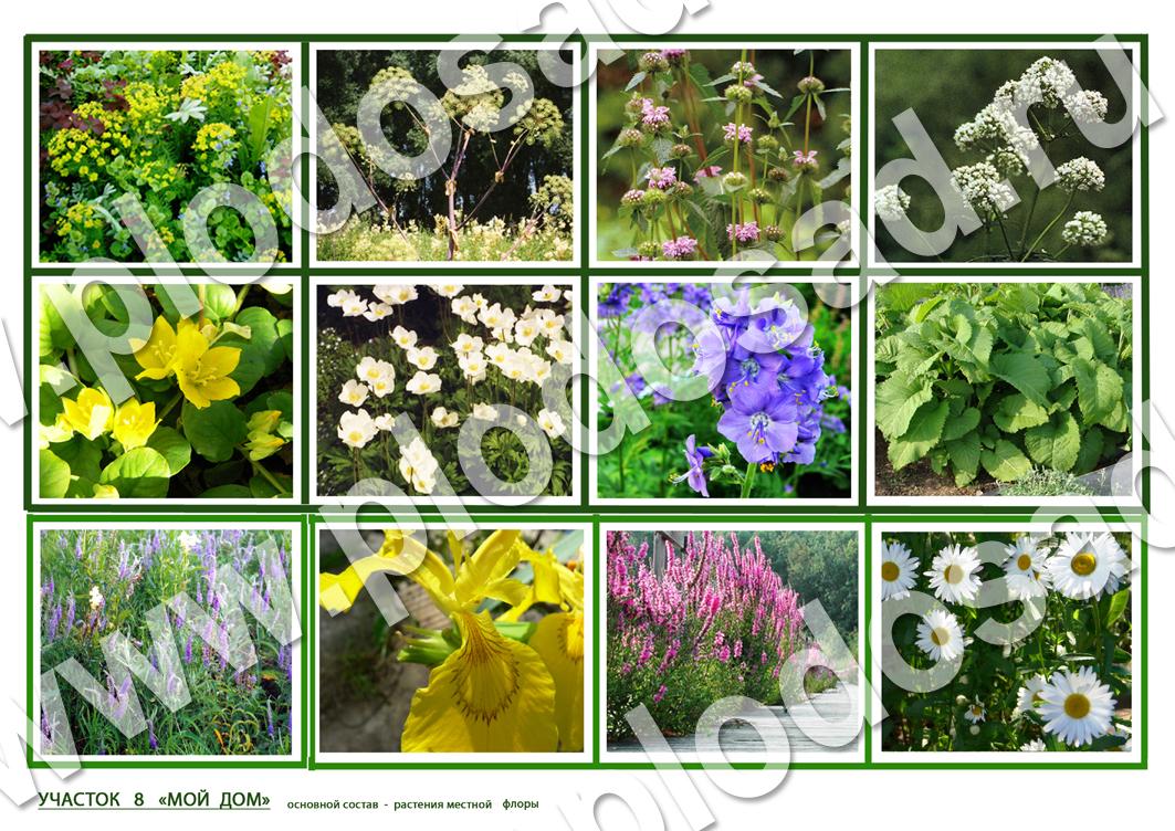 Растения_