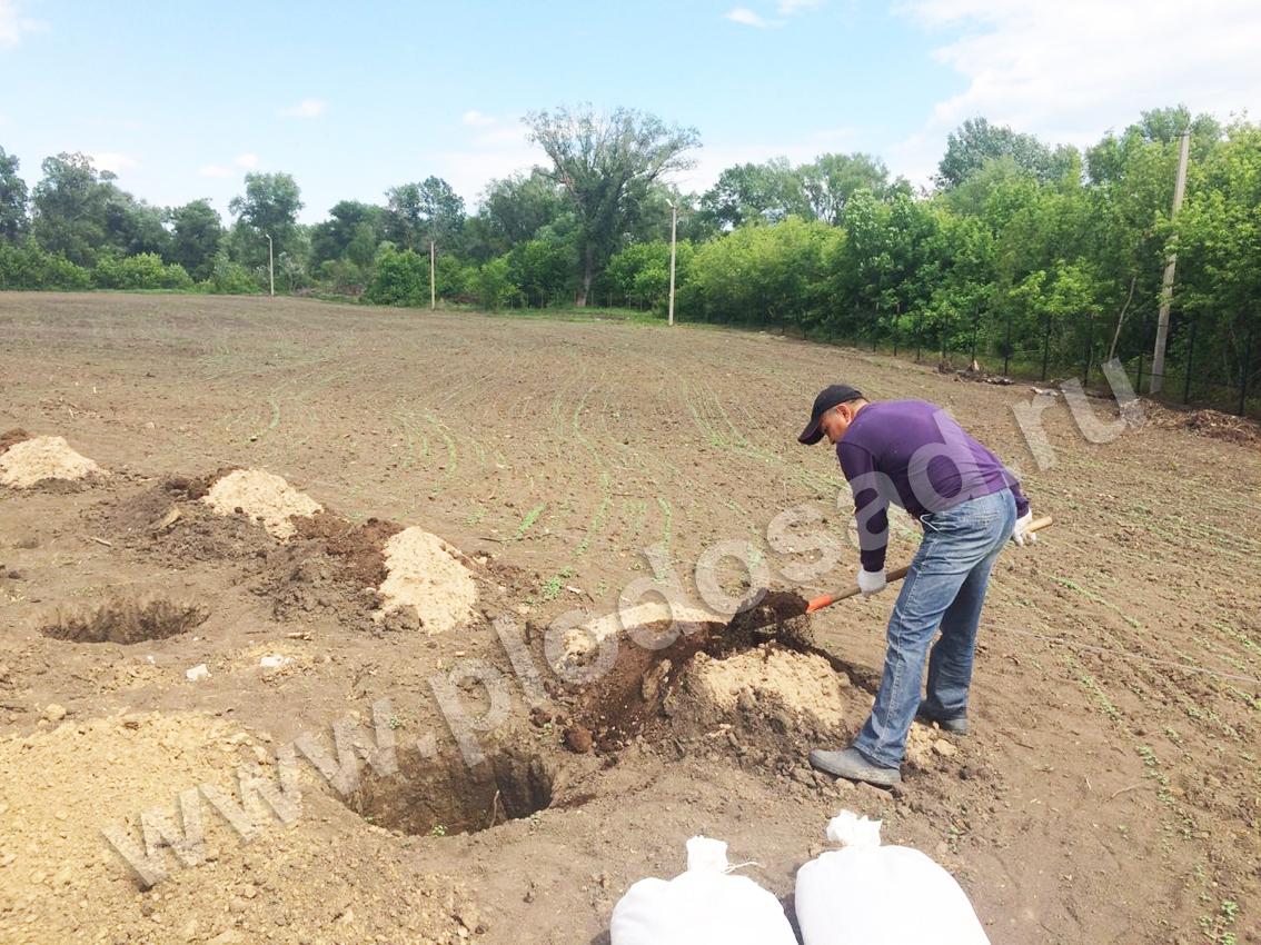 Перемешивание земли, перегноя, песка и заполнение ям (2)