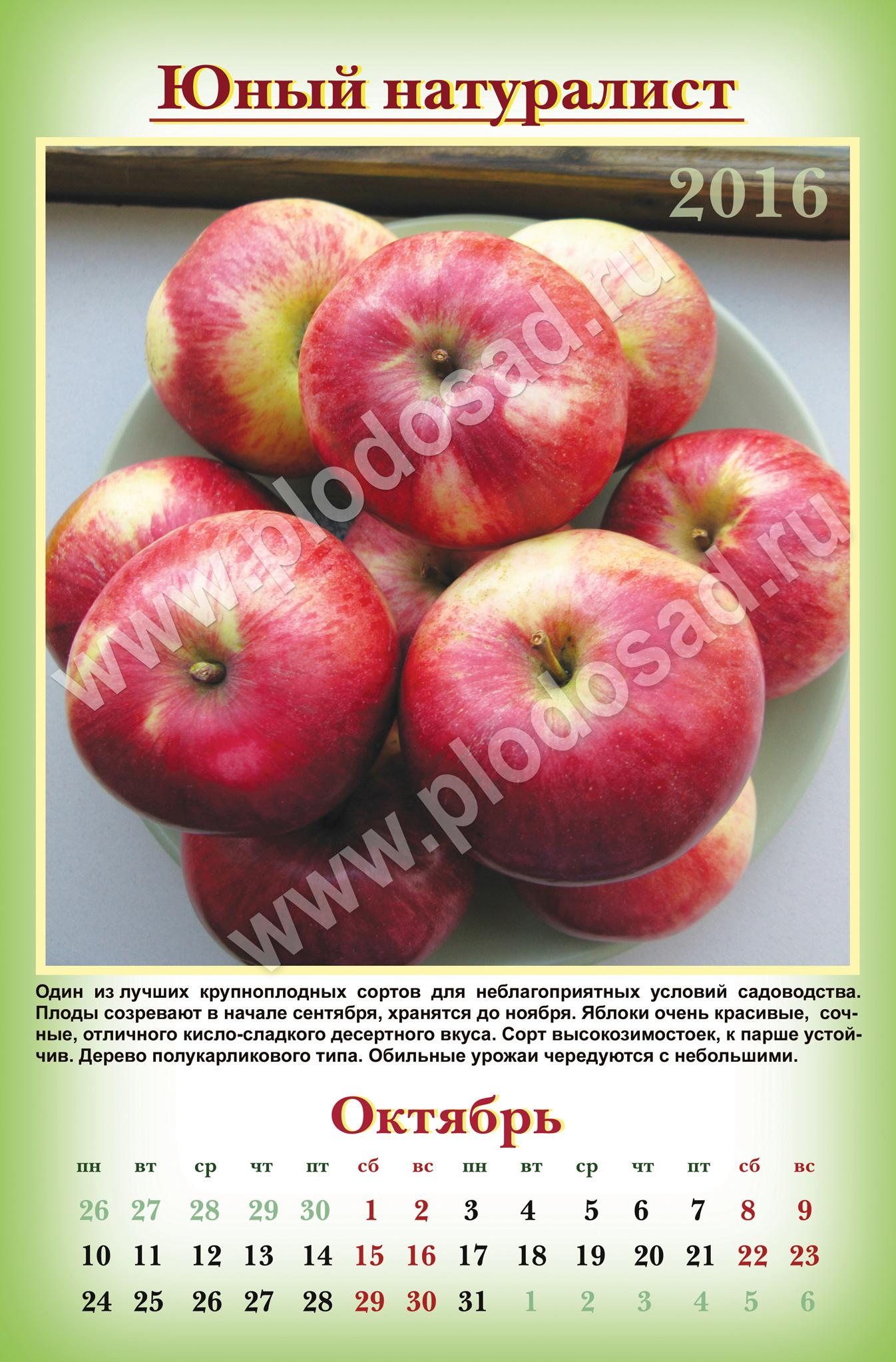 List_12_Октябрь_Юный натуралист