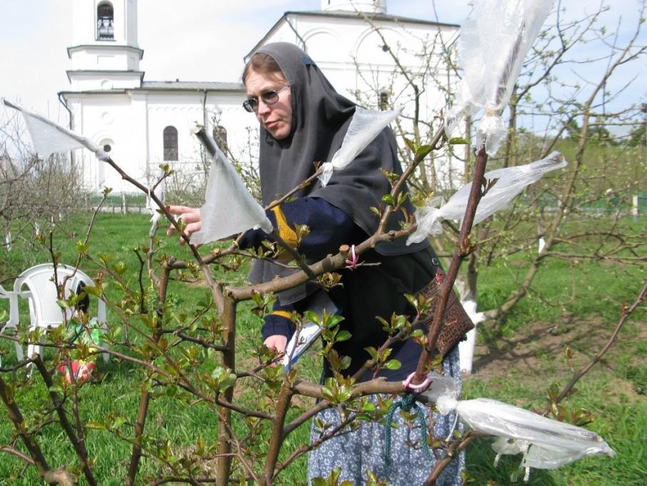 Вознесенский Оршин монастырь. Инокиня Анастасия делает прививки
