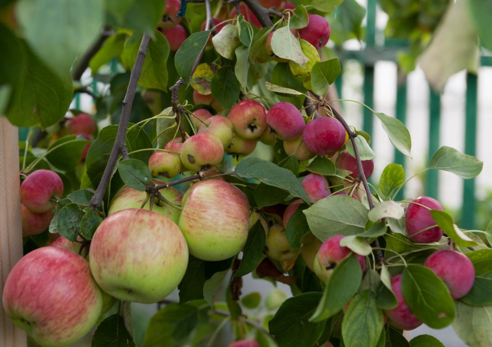 Райской яблочко 10 лет спустя 4