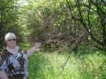 В погибающем коллекционном саду из сортов моего отца. 2011 год. г.Мичуринск