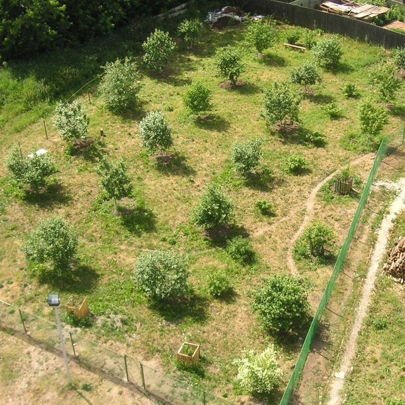 Сад после первой обрезки на третий год жизни (2007 г.)