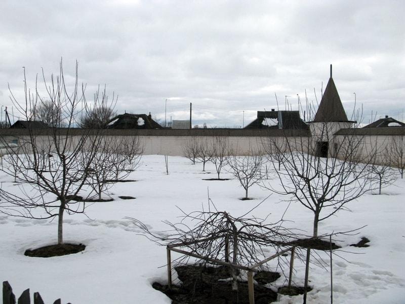 Снег начинает таять, вокруг деревьев появляются проталины - умело распорядитесь талой водой.