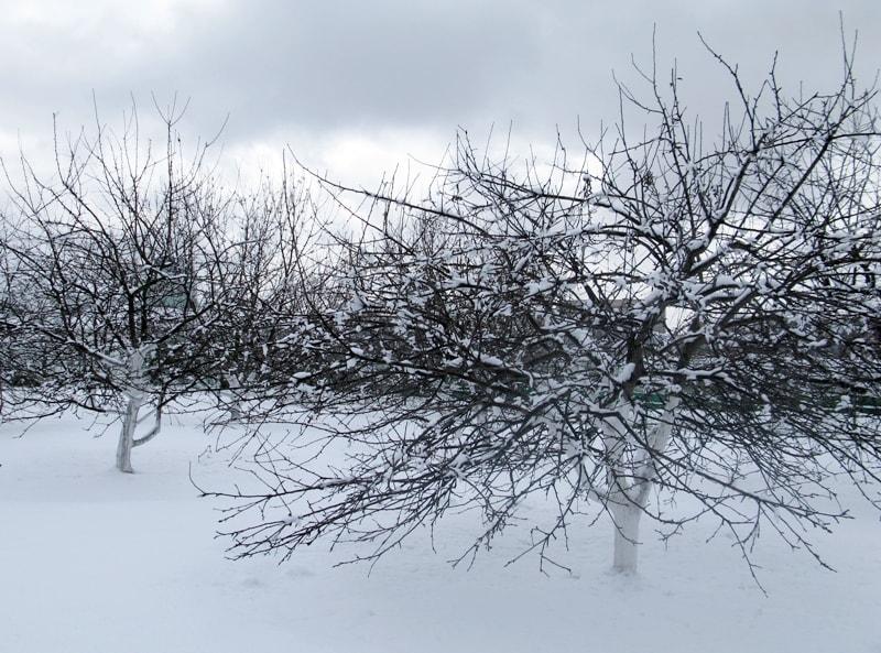 Пока сад в снегу - готовьтесь к летней засухе.